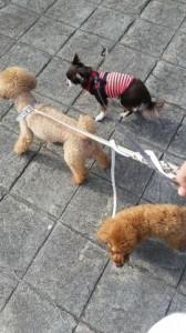 みんなで仲良くお散歩