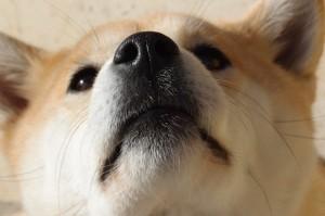 dog-1203351_1280