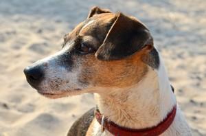 dog-1397226_1920