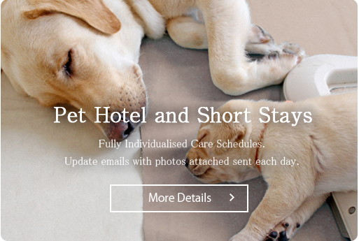Pet Hotel and Short Stays