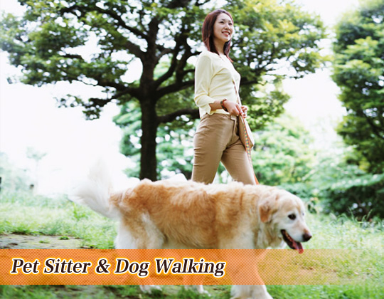 Pet Sitter & Dog Walking